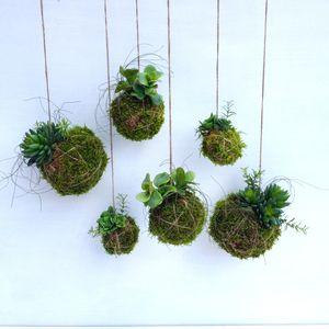 Artificial Kokedama - flowers & plants