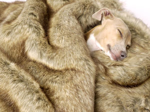Foxy Faux Fur Pet Blanket - beds & sleeping