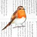 Hand Drawn And Painted Robin Brooch
