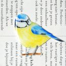 Hand Drawn And Coloured Bluetit On A Branch Brooch