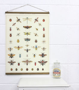 Natural History Insects Wall Hanging - contemporary art