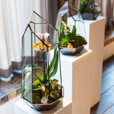Terrarium Design School In Your Office - corporate gifts