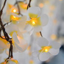 Tropical Frangipani Flower Light Chain
