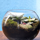Mowing The Lawn Mini World Terrarium Kit - garden