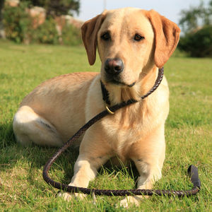 Rufus: Woven Leather Dog Slip Lead - pet leads & harnesses
