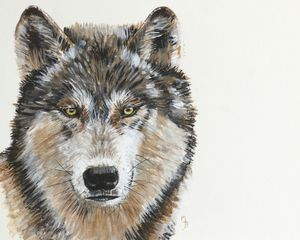 Wild Grey Wolf Mounted Giclée Print - children's pictures & paintings