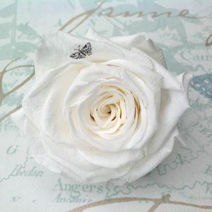 Butterfly Printed Rose Keepsake - home accessories