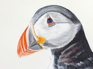 Puffin Mounted Giclée Print - children's pictures & paintings