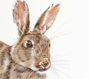 Isabel's Wild Rabbit Signed Mounted Giclée Print - animals & wildlife