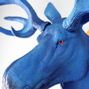 Blue Moose Head