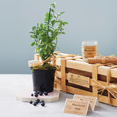 Grow Your Own Blueberry Jam Gift - garden