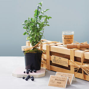 Grow Your Own Blueberry Jam Gift - gifts for her