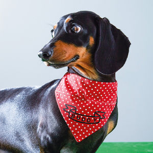 Personalised Dog Neckerchief - shop the brand film