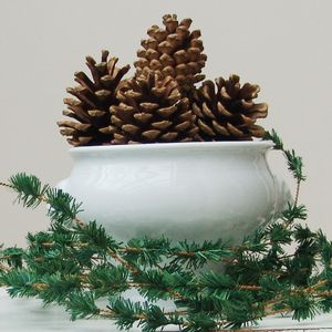 Set Of 12 Natural Pine Cones - table decorations