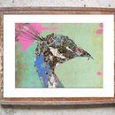 Pink Peacock Limited Signed Print