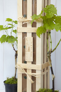 Personalised Grapevine Gift Set - wine