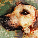 Ridgeback Dog Signed Limited Edition Print