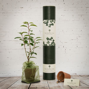 Flowering Cherry Tree Gift - for him