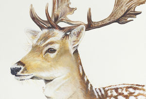 Fallow Deer Signed Mounted Giclée Print - animals & wildlife