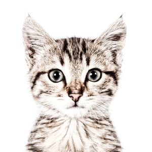 Cat Magnetic Wallpaper - home accessories