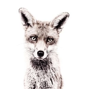 Fox Magnetic Wallpaper - home decorating