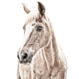 Horse Magnetic Wallpaper - home decorating