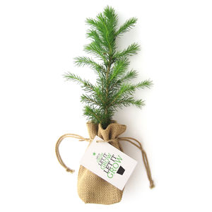 Little Norway Spruce Christmas Tree - christmas trees