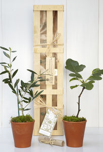 Mediterranean Orchard Tree Gift Crate - garden styling