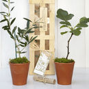 Mediterranean Orchard Tree Gift Crate