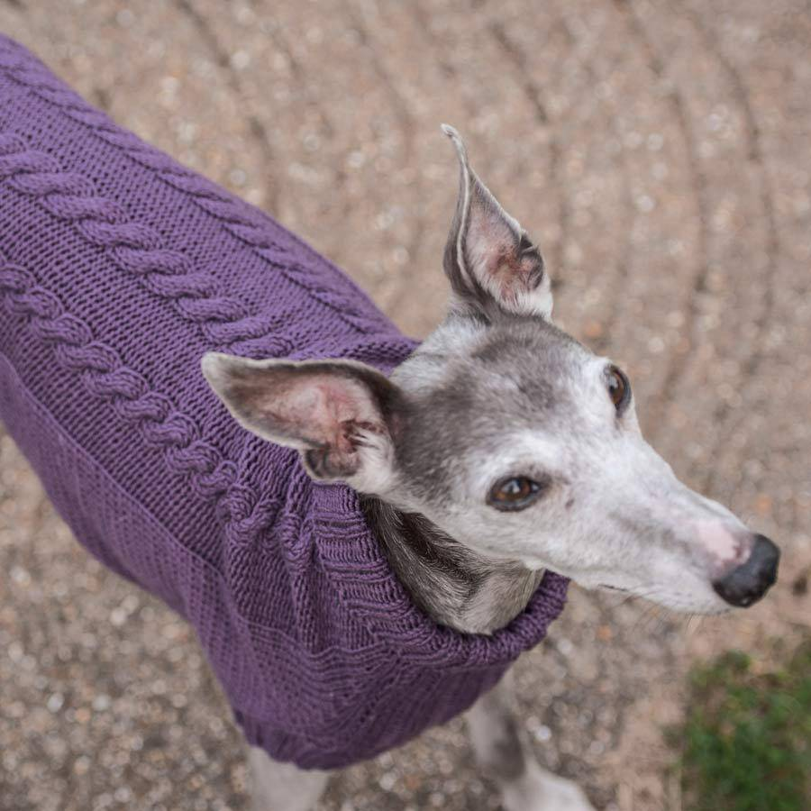 dog jumper knitting kit wonderful whippets by redhound for dogs notonthehig...