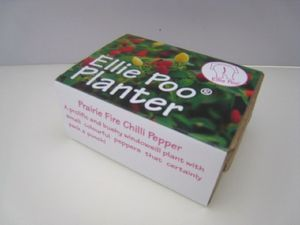 Grow Your Own Fiery Chilli Peppers