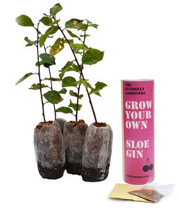 Grow Your Own Sloe Gin Kits - gardening
