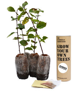 Grow Your Own Tree Damson Gin Kits