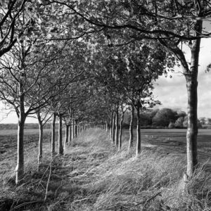 Oak Trees, Black And White Signed Print - nature & landscape