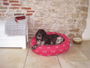 Raspberry Stylish Dog Donut Bed With Removable Cushion