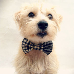Black Tartan Pet Bow Tie