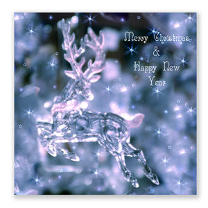 Reindeer Christmas Cards Pack Of 10