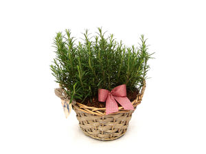 Plant Gifts Vintage Rosemary Basket