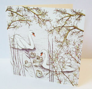 Swans Swimming Card