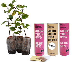 Grow Your Own Sloe And Damson Gin Gift Set