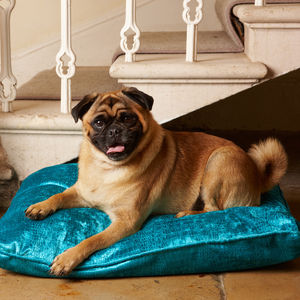 Osborne And Little Velvet Wool Filled Dog Bed - beds & sleeping