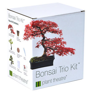 Bonsai Trio Kit Three Distinctive Bonsai Trees To Grow - home