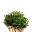 Plant Gifts Vintage Herb Basket Arrangement