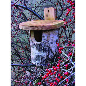 Silver Birch Bird Nest Box - birds & wildlife