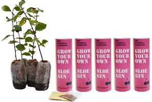 Grow Your Own Sloe Gin Orchard X5 Packs