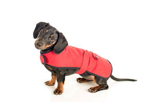 Dachshund Dog Coat - clothes