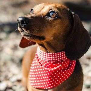 Dog Neckerchief Red Prints - dogs