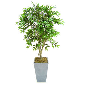 Artificial French Ficus Tree - living & decorating