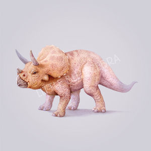 Illustrated Triceratops Print