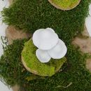 White Mushroom Table Decoration